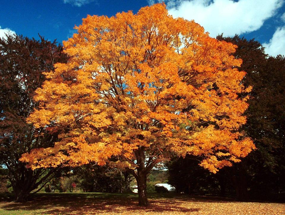 <p>Of all the sites with incredible New England fall foliage, Concord is among the most historic. More specifically, the Minute Man National Park is where the first battle of the American Revolutionary War was fought. </p>