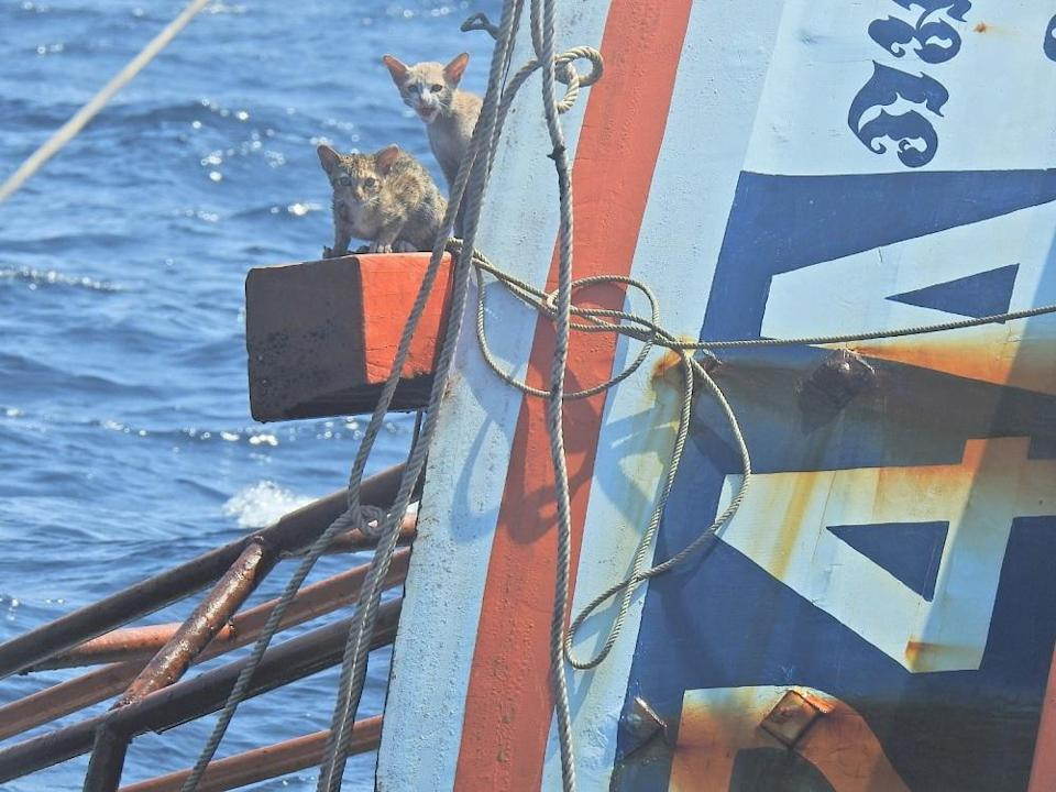 The cats clung to a wooden beam for dear life as the capsized boat continued to descend into the water. — Picture via Facebook/wichit.pukdeelon