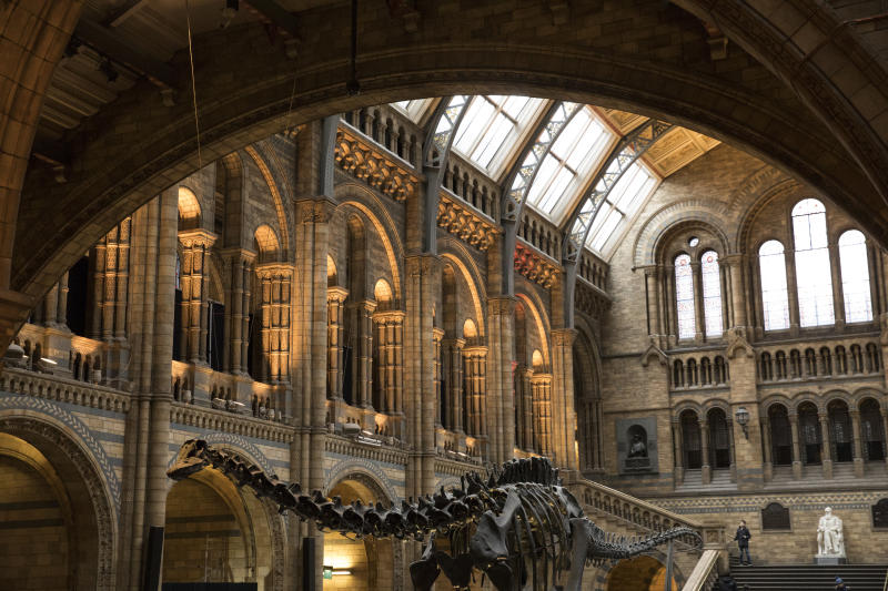 LONDON, ENGLAND - JANUARY 04: 'Dippy' the Diplodocus stands in the great hall at Natural History Museum on January 4, 2017 in London, England. The 70ft long (21.3m) plaster-cast sauropod replica, which is made up of 292 bones, is set to leave the Natural History Museum in London, where it has been for 109 years, before going on a national tour. Dippy will be replaced by an 83 foot long real skeleton of a Blue Whale, which will be hung from the ceiling. (Photo by Dan Kitwood/Getty Images)
