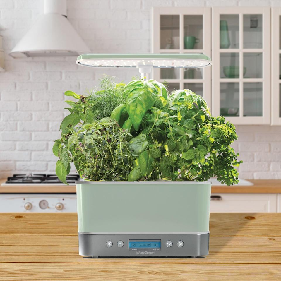 <p>This <span>AeroGarden Harvest Elite Gourmet Herbs Seed Kit</span> ($212) is ideal for someone who lives in a place with no outdoor space. They can grow their own herbs and vegetables indoors.</p>