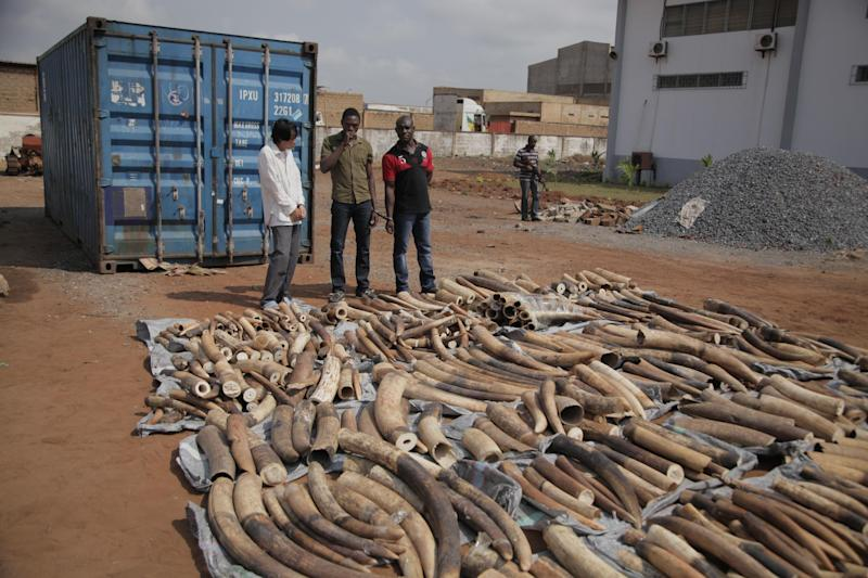 A Vietnamese man, left rear, and his two Togolese accomplices, rear center, are paraded by Togo troops to the media in the city of Lome, Togo, Tuesday, Jan. 28, 2014. Police in Togo say they have arrested three men after discovering nearly two tons of ivory in a container marked for shipping to Vietnam. (AP Photo/Erick Kaglan)