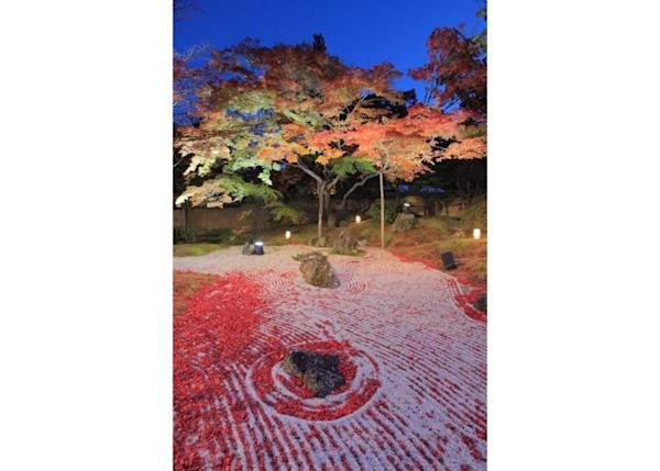 ▲ The illuminated rock garden adorned in fallen autumn leaves is a sight you really must see.