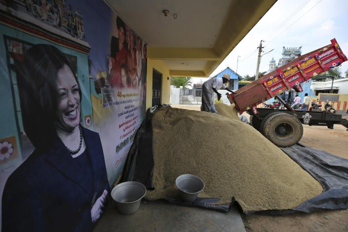 An Indian villager unloads paddy from a truck next to a banner displaying photographs of U.S. Vice President-elect Kamala Harris in Thulasendrapuram, the hometown of Harris' maternal grandfather, south of Chennai, Tamil Nadu state, India, Tuesday, Jan. 19, 2021. The inauguration of President-elect Joe Biden and Vice President-elect Kamala Harris is scheduled be held Wednesday. (AP Photo/Aijaz Rahi)