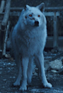 """<p>Ned may have initially thought that Ghost was second-tier dire wolf, but he makes for a first-rate costume. Ghost is a super simple costume to recreate, and you can likely use a few items you already have in your closet, like white leggings and a white top. And if you really want to stay true to his storyline, you can partially cut off one of your wolf ears. </p><p><a class=""""link rapid-noclick-resp"""" href=""""https://www.amazon.com/Tanming-Womens-Fashion-Autumn-Winter/dp/B076BMWC6Y?tag=syn-yahoo-20&ascsubtag=%5Bartid%7C10070.g.28762544%5Bsrc%7Cyahoo-us"""" rel=""""nofollow noopener"""" target=""""_blank"""" data-ylk=""""slk:SHOP WHITE FAUX FUR VEST"""">SHOP WHITE FAUX FUR VEST</a> </p><p><a class=""""link rapid-noclick-resp"""" href=""""https://www.amazon.com/HAOAN-Handmade-Halloween-Christmas-Accessories/dp/B08HCXK3NY?tag=syn-yahoo-20&ascsubtag=%5Bartid%7C10070.g.28762544%5Bsrc%7Cyahoo-us"""" rel=""""nofollow noopener"""" target=""""_blank"""" data-ylk=""""slk:SHOP WOLF EARS"""">SHOP WOLF EARS</a></p>"""