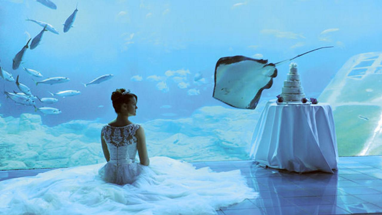 "<p>Watch the watery world swim past as you say your vows in the <a href=""http://www.national-aquarium.co.uk/host-an-event/weddings-and-proposals/"">National Marine Aquarium</a> in Plymouth. Up to 130 guests can be seated on dry land with a mesmerising sea-life backdrop. Although you can't have the ceremony here, you can have a reception complete with well-wishers of the marine variety. Wedding packages from £45 per head. [Photo: National Marine Aquarium]</p>"