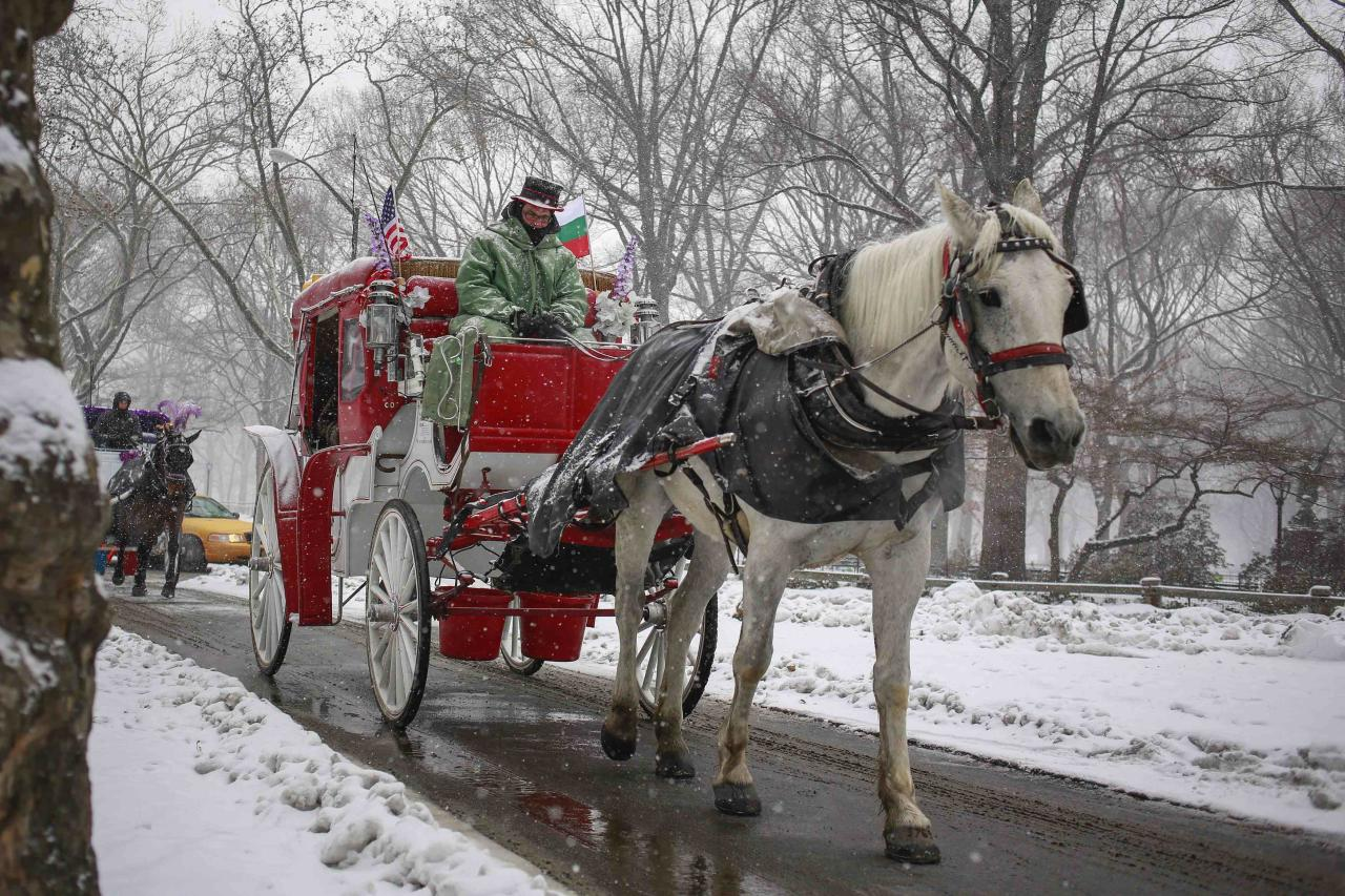 A horse-drawn carriage makes its way through Central Park during snowfall in New York, December 17, 2013. Several inches of snow was forecasted to fall across the northeast U.S. on Tuesday as winter storm warnings were put in place, said the National Weather Service, according to local reports. REUTERS/Shannon Stapleton (UNITED STATES - Tags: ENVIRONMENT SOCIETY ANIMALS)