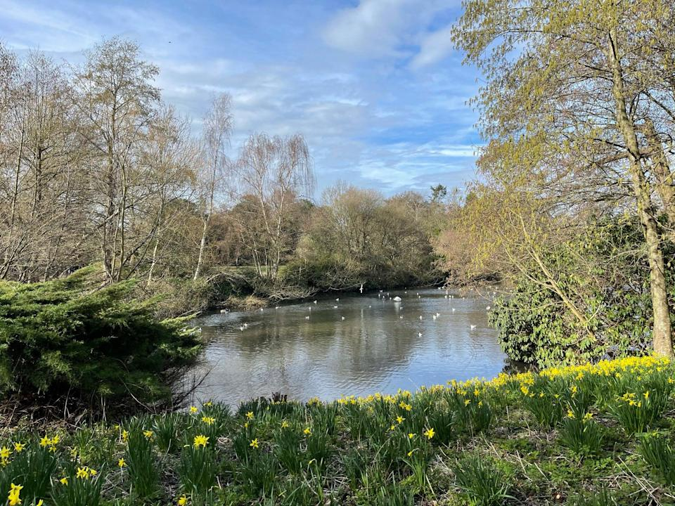 <p>Kelsey Park where the boy was playing</p> (Elliot Wagland)