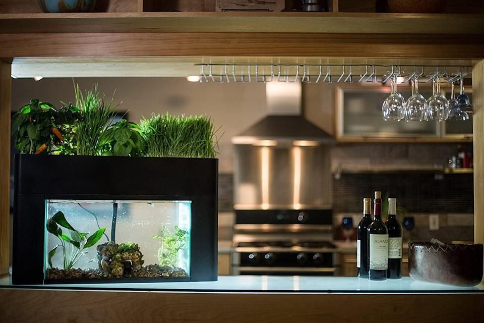 <p>How cool is this<span>AquaSprouts Garden</span> ($160)!? It's a self-sustaining desktop aquarium ecosystem. You can plant a garden on top and have a fully functioning aquarium on the bottom. The fish waste feeds the garden and the garden keeps the fish's home clean.</p>