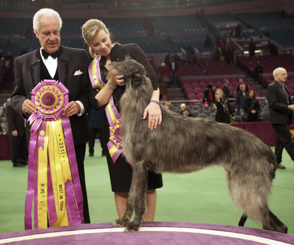 Scottish deerhound Hickory poses for photographers with his handler Angela Lloyd, right, and judge Paolo Dondina after Hickory won best in show during the 135th Westminster Kennel Club Dog Show Tuesday, Feb. 15, 2011, at Madison Square Garden in New York.