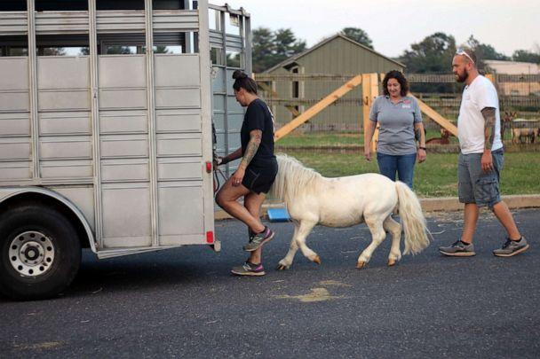PHOTO: Waffles is escorted into a trailer for his ride home with Hemingway. (Bucks County SPCA)