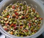 <p><b>Mixed Sprouts Salad</b>:</p><p>Lentils have been an important part of the Indian diet since ages. Lentils, when sprouted, offer a world of goodness. Sprouts are rich in proteins, dietary fibers, Vitamins A, C, K, folate and minerals such as iron, calcium, manganese, copper, zinc, and magnesium. Though this recipe may be little time consuming as you have to sprout the various lentils and boil them, the health benefits they offer is worth the effort. To make this salad, boil the sprouts of your choice, such as Moong, Rajma, Kabuli Chana & more. Next, add grated radish & chopped tomatoes. Make the dressing by whisking 1 cup yogurt with chopped fresh mint & some salt & pepper to taste. Garnish with pomegranate pearls and serve. <br></p>