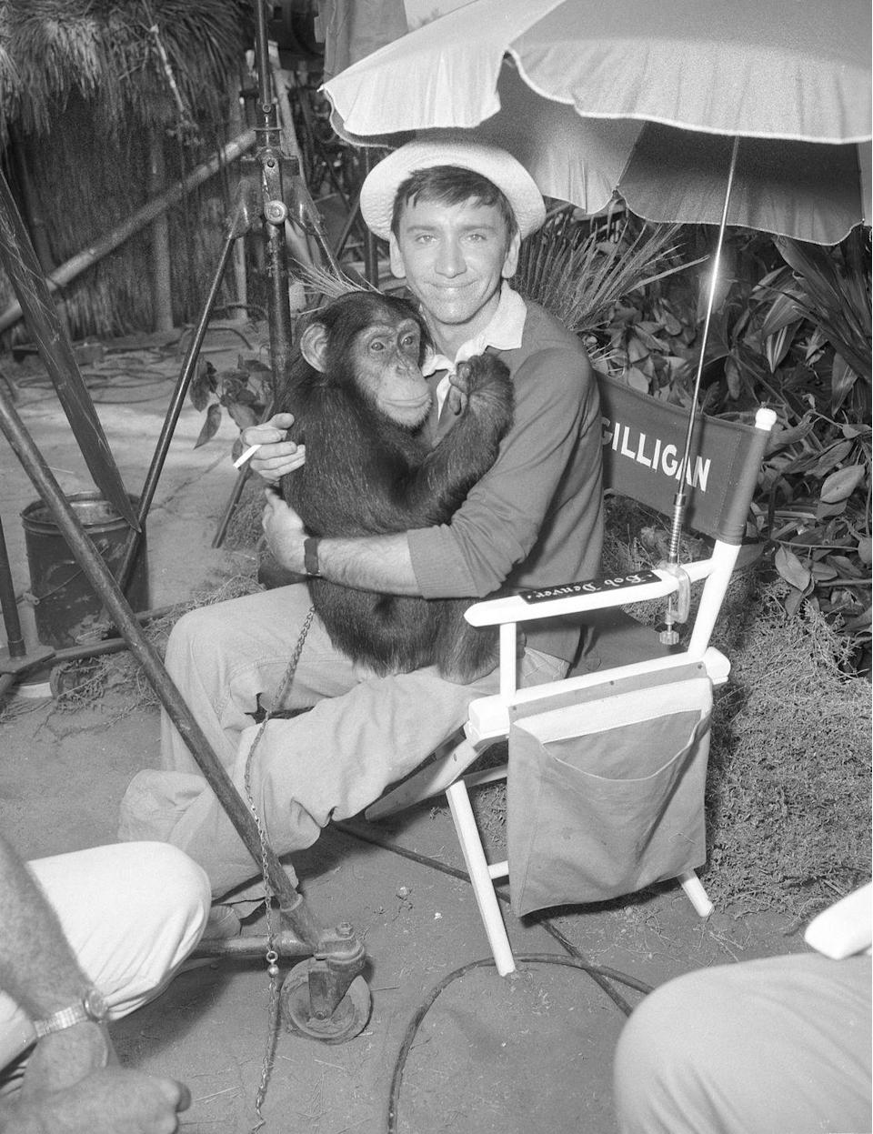 "<p>The star of <em>Gilligan's Island</em> <a href=""https://www.schultzmyers.com/injury-and-film-5-actors-who-were-nearly-killed-while-filming/"" rel=""nofollow noopener"" target=""_blank"" data-ylk=""slk:almost got attacked by a lion"" class=""link rapid-noclick-resp"">almost got attacked by a lion</a> when filming a scene for the show. He was supposed to go into Mr. and Mrs. Howell's hut, unaware a lion was in there, but things went awry when the animal jumped towards Denver. Luckily, the trainer stepped in just in time.</p>"