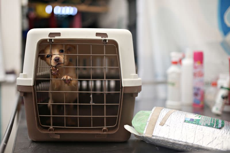 A puppy which is under the care and protection of the Mayor's Animal Care Unit office is seen inside a cage at their facilities amid the coronavirus disease (COVID-19) outbreak in Bogota