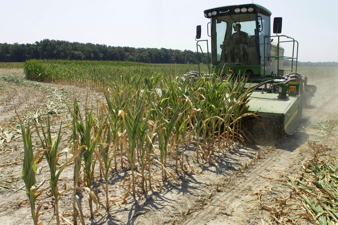 Steve Niedbalski chops down his drought and heat stricken corn for feed Wednesday, July 11, 2012 in Nashville Ill. Farmers in parts of the Midwest, dealing with the worst drought in nearly 25 years, have given up hope for a corn crop and are mowing over their fields and baling the heat withered plants for livestock feed. (AP Photo/Seth Perlman)