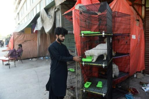 A pet shop owner feeds an animal outside his shuttered store in Karachi