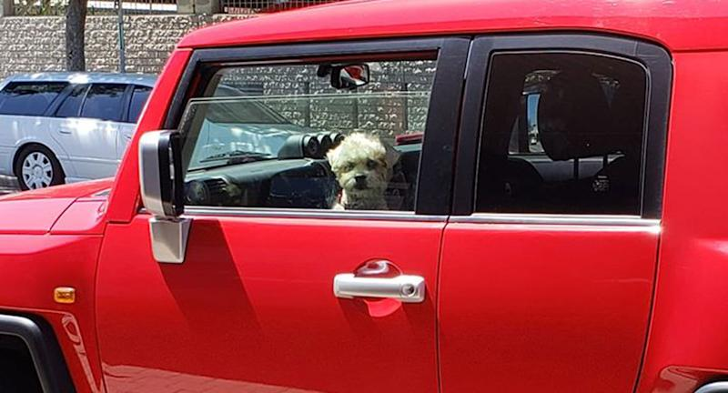 A dog pictured in a red car with the window rolled down.