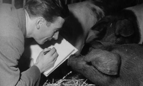 Animator Eddie Radage sketches pigs in 1953 in preparation for his work on the film adaptation of George Orwell's Animal Farm.