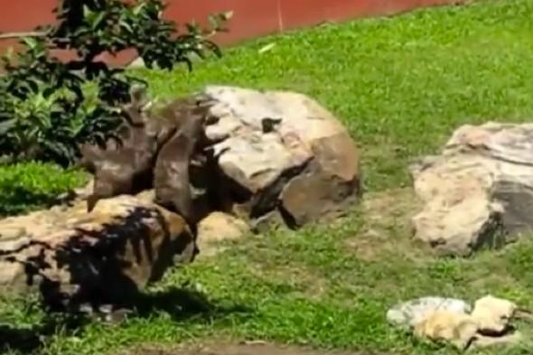 Otterly silly! Butterfly sends animals into a tailspin