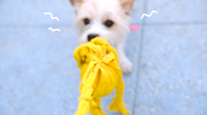Your Playful Pup Will Love This Easy Diy Pet Toy