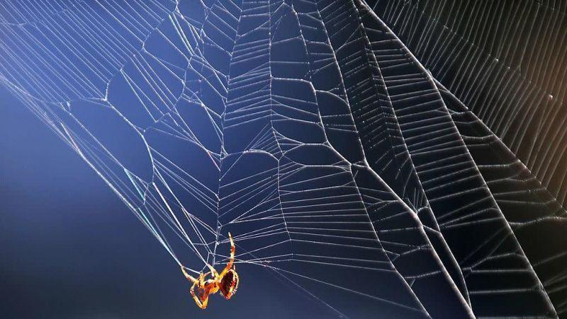 A spider weaving a web.