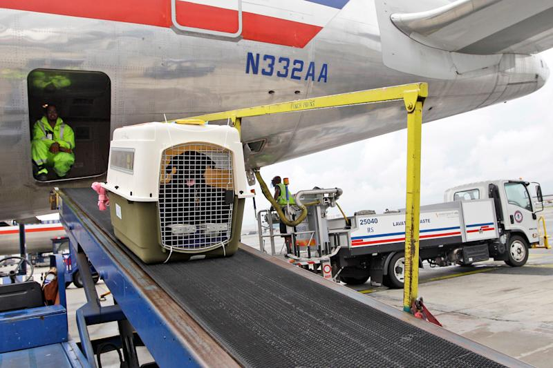 Ask the Captain: Is my pet safe in the cargo hold? Why do planes turn soon after takeoff?