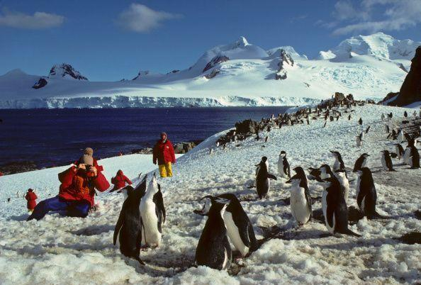 <p>If you were looking for seclusion then you probably made your way to Half Moon Island in Antarctica. This destination was a favorite for many who preferred animals to humans. </p>