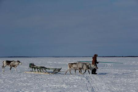 """A herder of the agricultural  cooperative organisation """"Harp"""" walks with reindeer at a reindeer camping ground, about 250 km south of Naryan-Mar, in Nenets Autonomous District, Russia, March 4, 2018. REUTERS/Sergei Karpukhin"""
