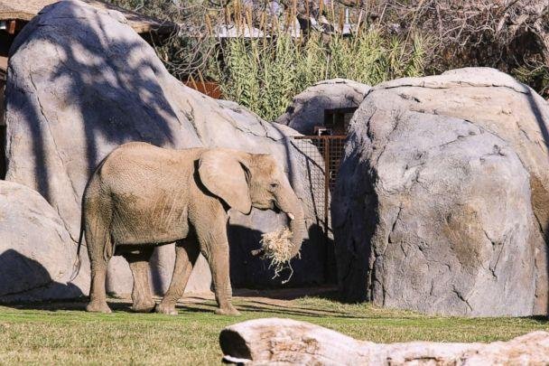 PHOTO: An 11-year-old African elephant, Bets, died at the Fresno Chaffee Zoo on Feb. 9, 2019. (Fresno Chaffee Zoo)