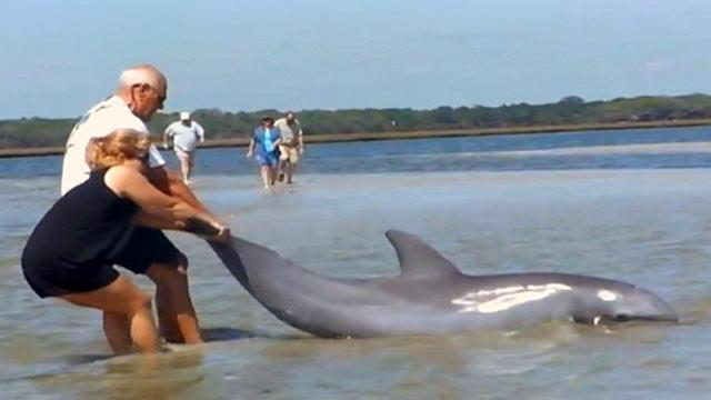 Florida Family Rescues Stranded Dolphin