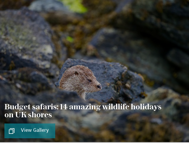 14 amazing wildlife holidays on UK shores