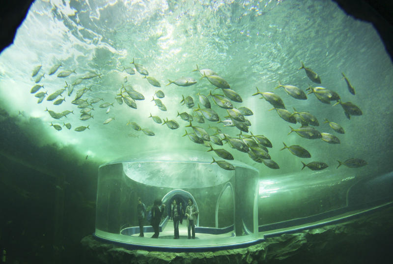 "Visitors tour an aquarium during a media day of Expo 2012, in Yeosu, South Korea, Wednesday, May 9, 2012. The expo will open for three months on May 12 under the theme of ""The Living Ocean and Coast: Diversity of Resources and Sustainable Activities."" (AP Photo/Yonhap) KOREA OUT"