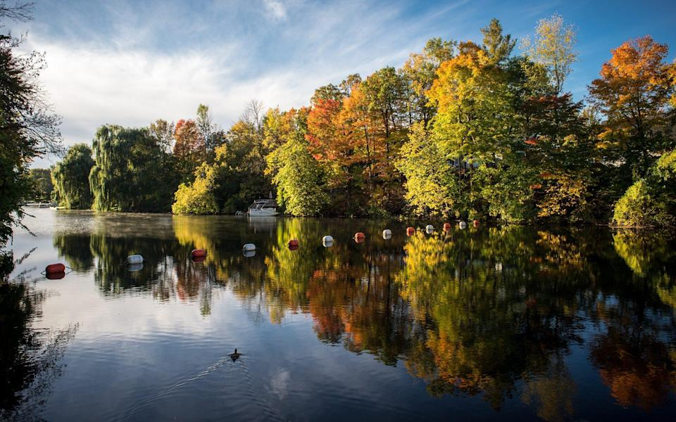 water surrounded by autumnal trees, duck and buoys - Danielle Donders/Getty Images