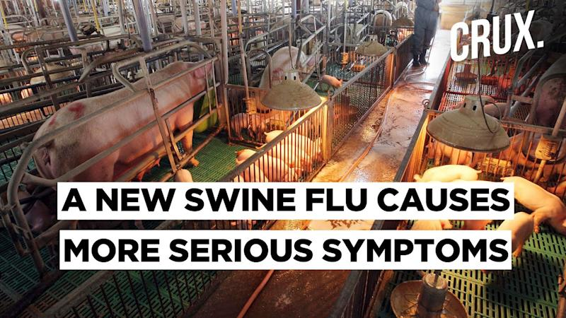 Highly Contagious Variant Of Swine Flu Found In China, Gives Rise To Fear of Pandemic