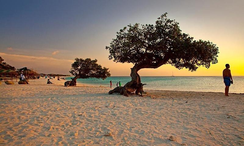 """<a href=""""https://www.tripadvisor.com/Attraction_Review-g147249-d150447-Reviews-Eagle_Beach-Palm_Eagle_Beach_Aruba.html"""" target=""""_blank"""">Eagle Beach</a> is a popular resort beach that features the white sands and turquoise waters you'd expect of an ideal Caribbean beach.<strong><br /><br />Nearby beachfront hotel:</strong><a href=""""https://www.tripadvisor.com/Hotel_Review-g147249-d150683-Reviews-Amsterdam_Manor_Beach_Resort-Palm_Eagle_Beach_Aruba.html"""" target=""""_blank"""">Amsterdam Manor Beach Resort</a>,<strong></strong>from $298 per night"""