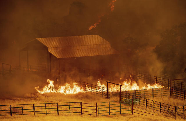 <p>Flames rise around an outbuilding as the County fire burns in Guinda, Calif., July 1, 2018. Evacuations were ordered as dry, hot winds fueled a wildfire burning out of control Sunday in rural Northern California, sending a stream of smoke some 75 miles south into the San Francisco Bay Area. (Photo: Noah Berger/AP) </p>