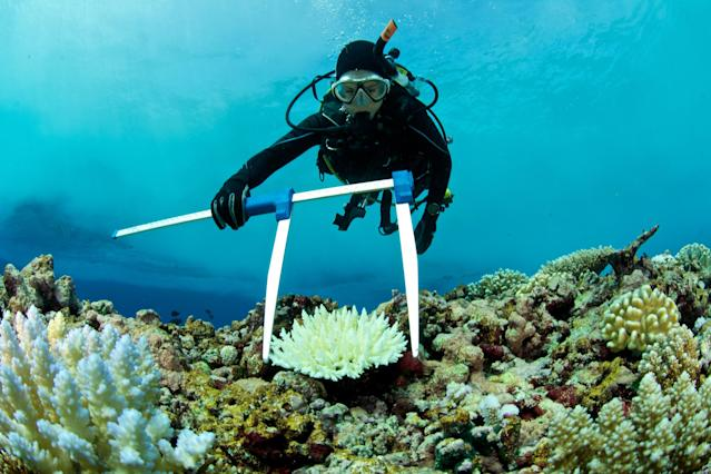 Nearly half of the coral in the northern, most pristine part of the reef system is gone after two successive heat waves