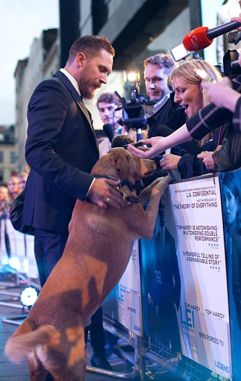 """<p>Most stars don't bring their dogs to their movie premieres, but wouldn't it be awesome if they did? Hardy attempted to start a trend at <em>Legend</em>'s 2015 debut in London. (Photo: <a rel=""""nofollow noopener"""" href=""""https://www.facebook.com/TomHardyUK/photos/a.556740111003689.135180.555896884421345/1055193411158354/?type=3&theater"""" target=""""_blank"""" data-ylk=""""slk:Tom Hardy via Facebook"""" class=""""link rapid-noclick-resp"""">Tom Hardy via Facebook</a>)<br><br></p>"""