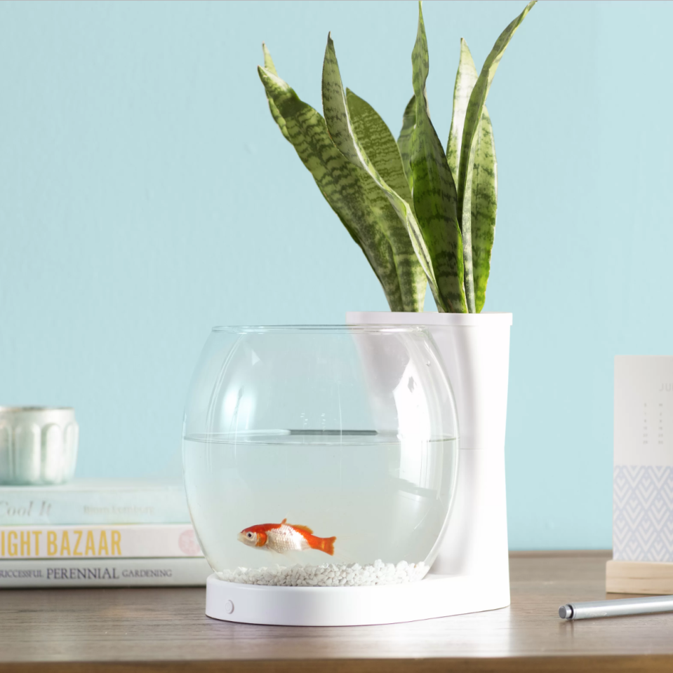 """<h3>Modern Fishbowl-Planter</h3><p>Join your love of plants with your love for your favorite fish by housing the little pet inside this modern aquarium-planter.</p><br><br><strong>Archie & Oscar</strong> Gordie Betta Planter Aquarium Bowl, $18.98, available at <a href=""""https://www.wayfair.com/pet/pdp/archie-oscar-gordie-075-gallon-betta-planter-aquarium-bowl-aosc1654.html"""" rel=""""nofollow noopener"""" target=""""_blank"""" data-ylk=""""slk:Wayfair"""" class=""""link rapid-noclick-resp"""">Wayfair</a>"""
