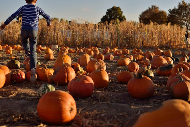 A kid jumps pumpkins in a patch.