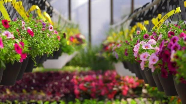 'If you can dig, if it's nice, get out there and do it,' said professional gardener and author Lyndon Penner.  (J.A. Laporte Flowers and Nursery - image credit)
