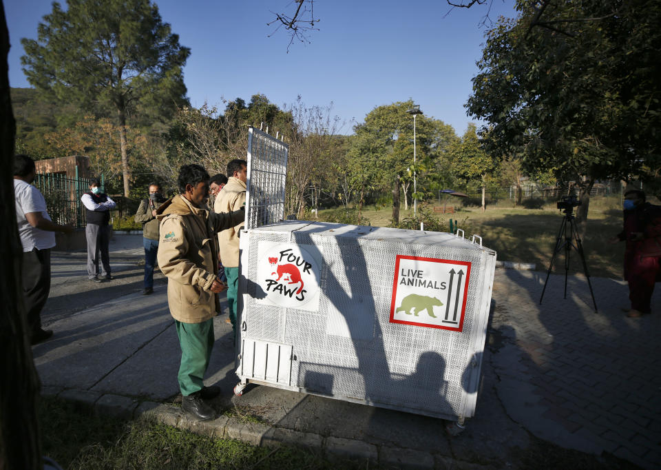 Pakistani wildlife workers move a crate to be used for transporting a sick brown bear, at the Marghazar Zoo, in Islamabad, Pakistan, Wednesday, Dec. 16, 2020. A pair of sick and badly neglected dancing Himalayan brown bears will leave Islamabad's notorious zoo Wednesday for a sanctuary in Jordan, closing down a zoo that once housed 960 animals. The Marghazar Zoo's horrific conditions gained international notoriety when Kaavan, dubbed the world's loneliest elephant, grabbed headlines and the attention of iconic American entertainer Cher. (AP Photo/Anjum Naveed)