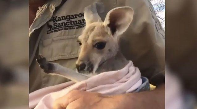 Terri seems content getting a cuddle. Source: The Kangaroo Sanctuary Alice Springs/ Facebook
