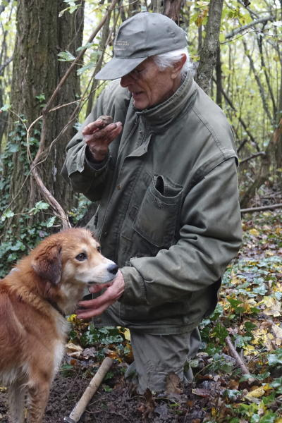 In this photo taken on Sunday, Nov. 10, 2019, Carlo Olivero smells a truffle loosened from the earth in the woods near Alba, Italy. Olivero has been hunting truffles for more than 40 years, and worries about climate change and the transition of wooded land to vineyards and orchards will impoverish future truffle production. (AP Photo/Martino Masotto)