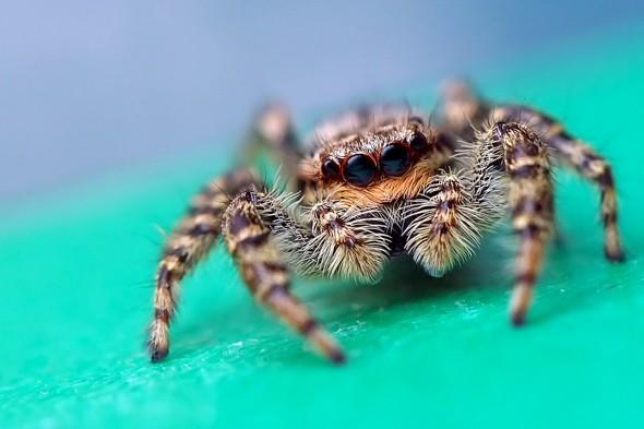 New £2bn theme park in Kent threatened by colony of rare spiders