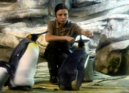 Broody male penguin couple adopt abandoned egg at Berlin Zoo