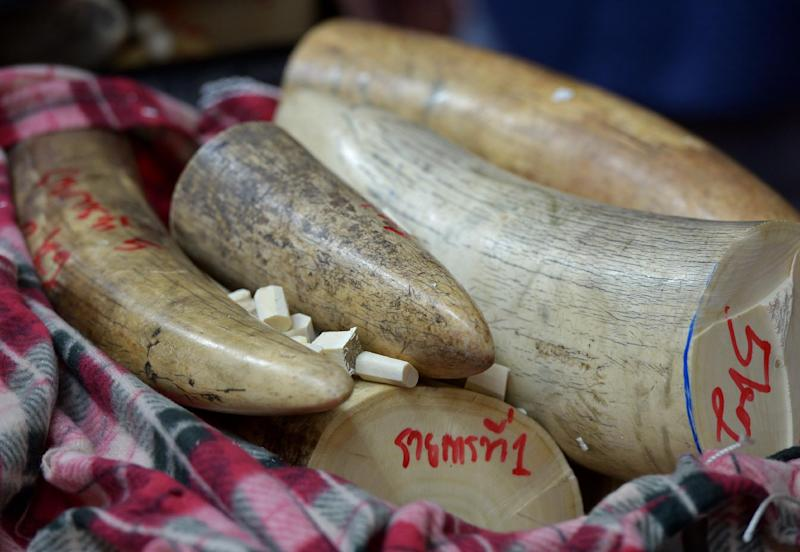 This picture taken on August 30, 2013 shows confiscated elephant tusks displayed during a press conference at the customs office in Bangkok