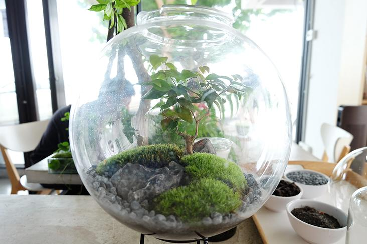 The ecosystem of the rainforest can be demonstrated through a small forest in a bottle terrarium like this one — Picture by Steven Ooi K.E.