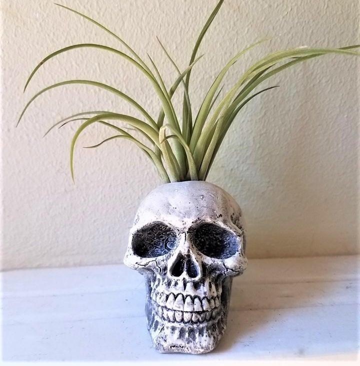 """<p>The bone-chilling <a href=""""https://www.popsugar.com/buy/Halloween-Skull-Planter-492098?p_name=Halloween%20Skull%20Planter&retailer=etsy.com&pid=492098&price=18&evar1=casa%3Aus&evar9=46619279&evar98=https%3A%2F%2Fwww.popsugar.com%2Fhome%2Fphoto-gallery%2F46619279%2Fimage%2F46636630%2FHalloween-Skull-Planter&list1=shopping%2Challoween%2Cetsy%2Challoween%20decor%2Chome%20shopping&prop13=api&pdata=1"""" rel=""""nofollow"""" data-shoppable-link=""""1"""" target=""""_blank"""" class=""""ga-track"""" data-ga-category=""""Related"""" data-ga-label=""""https://www.etsy.com/listing/527776320/halloween-skull-planter-human-skull-air"""" data-ga-action=""""In-Line Links"""">Halloween Skull Planter</a> ($18) looks wonderful displayed in bookcases and on top of window sills. </p>"""