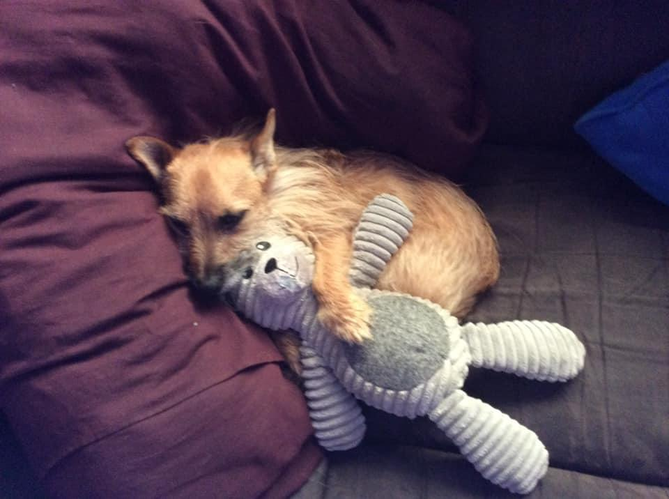 Odi shown after destroying the Aldi toy, cuddling up to one he clearly has a little more respect for. Source: Facebook