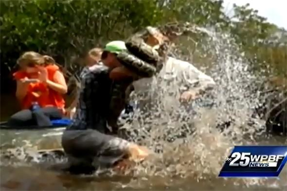 Tourists watch as guide wrestles 10ft python in Florida Everglades